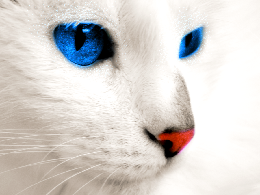 Are Cats With Blue Eyes And White Fur Blind